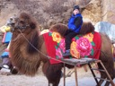 Max and a Camel - Beijing 2006